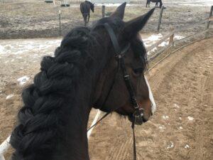 My horse and teacher, Penelope