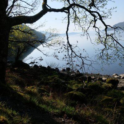 Tree over loch